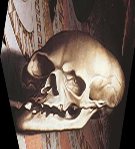amb-skull